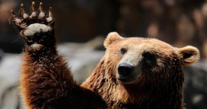 Рецессия близко, медведи наступают